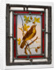 Window pane with a painted thrush, from the Woolpack Inn, Walsall by unknown